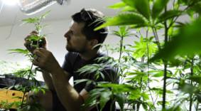 cannabis chanvre études médicales massage assis entreprise amatonic